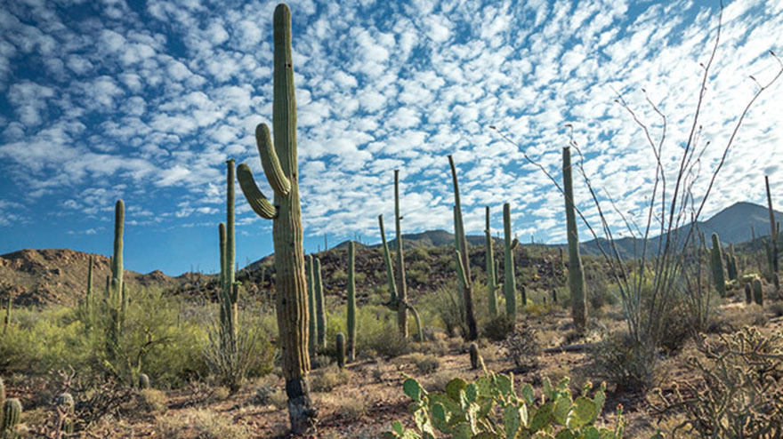 cactus removal in tucson