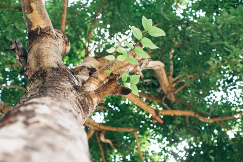 tree service in tucson