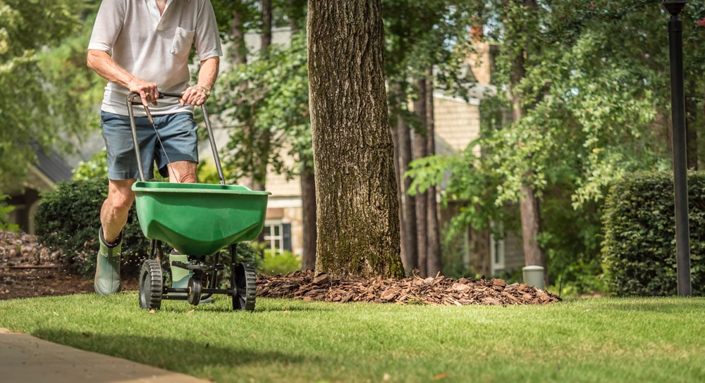 Does Your Yard Work Company In Tucson Offer Overseeding?