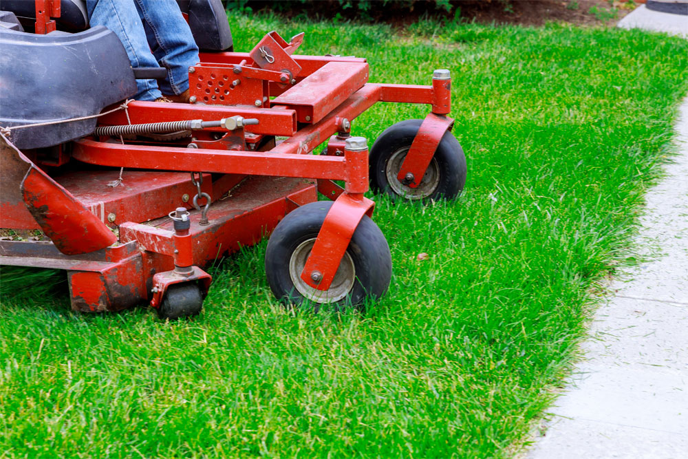 Do Your Services For Yard Work In Tucson Include Weed Control?